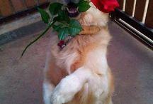 romantici