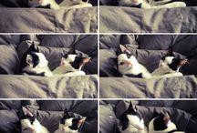Black White cat / Catlovers