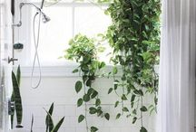 Hobbies - odla / Plants for every room and every location