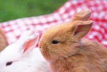 So Cute / #Animal Love