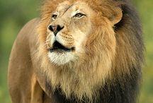 Reino animal fauna / by Pekkos Bill