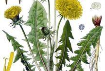 Eetbare kruiden en planten