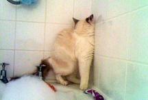 furball feline