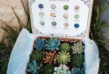 'Alo' to Vera and her succulent friends