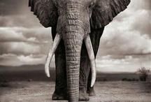 elephants ✰