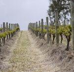 Grosset Vineyards