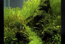 Aquatic Aquascaping