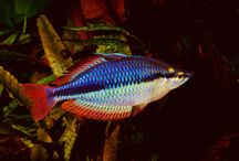 Freshwater fish,shrimp&snail