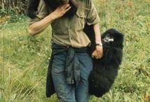Dian Fossey • Nyramachabelli