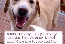 Caru Stories / Pet owners are making the choice to use Caru pet food. The results have been truly heartening!