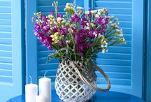 Spring Flowers / Beautifull arrangements in colourful pots!