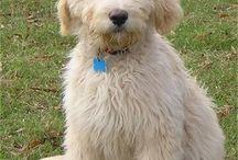 Puppy Love / by Bobbi Long