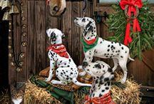 Psi vánoce