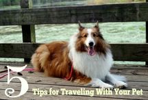 Pet travel / Pet travel tips and ideas.
