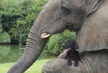 my lovely elephants