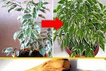 Реанимация для растений