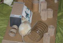 Ratten / Schöne Sachen rund um Ratten