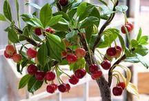 como plantar arboles