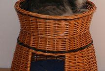 macska lak