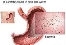 Bacteria / by Medicines Mexico
