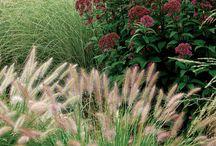 trawy w nasadzeniach