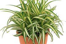 Interiores plantas