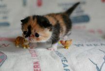 Crazy cat lady! / by Ashley Allen