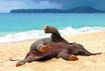 Beach is Better :)