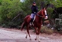 Horse Riding Tours at Kavos Bay - Aegina!