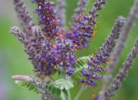 Native plants for Midwest  / by Julie Salt