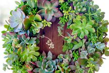 Succulents / by Cathy Wheeler