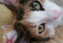 Katten van Dieuwkje