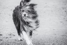 Urlaub mit Hund / Hundebesitzer wissen wie kompliziert es sein kann, seinen vierbeinigen Freund mit in den Urlaub zu nehmen. Im neuen HotelMeerBlickD21 auf Norderney ist das kein Problem: Bei uns können Hund und Herrchen gemeinsam entspannen.