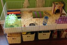 c c cage guinea pigs ideas