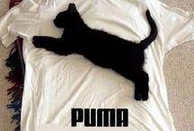 Puma(ΦωΦ)