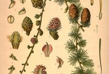 Nature - Planten