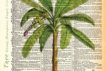 palmeras nain