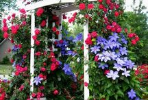 Lovely cottages and garden ideas / stuff