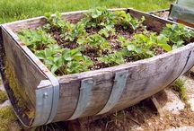 Dr. Greenthumb / Gardening