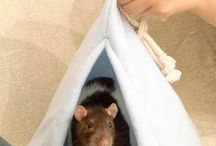 Rattis