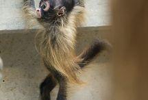 Animals / #Animal #Dog #Cat #Wolf #Fox #Puppie #Kitten #Squirrel #Bear #CaneCorso #Husky #Reptile #Snake #GermanShepherd #Dobermann #Rottweiler #Tiger #Lion #Pitbull #Staffordshire #Pig #Mastiff #Ferret #Chinchilla #Bird #Wildlife #Possum #Donkey #Horse #Otter #Duck #Hawk #Puma #Cougar #Lynx #Caracal #Leopard #Cheetah #Monkey #Sphynx #Seal #Panda #Insect #Koala