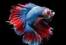tatouage aquarium