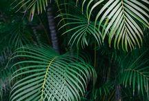 Plants Tropicals