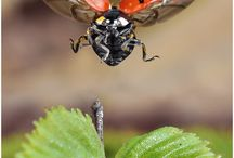 Ladybirds / Only you know why I love you !