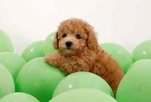 Aww, adorable animal babies