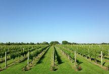 Impressive Vineyards !!!