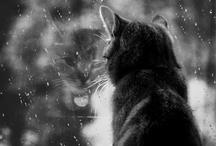 Rainy Days Special