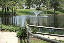 pond / by eason futch