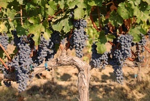 Vineyeard