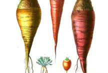 Local vintage vegetables